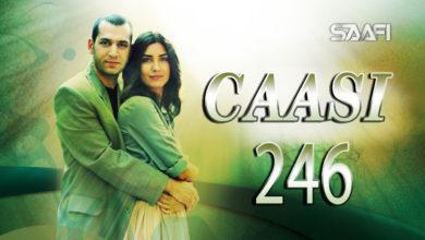 Photo of Caasi Part 246 Musalsal Turki Af Soomaali