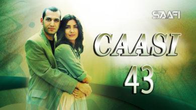 Photo of Caasi Part 43 Musalsal Turki Af Soomaali