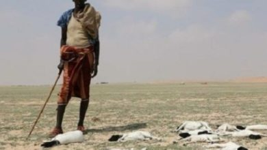 Photo of Galmudug Appeals For Humanitarian Aid After Severe Drought