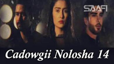 Photo of Cadowgii Nolosha Part 14