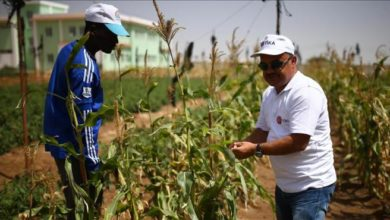 Photo of Turkish agencies bring modern agriculture to Somalia