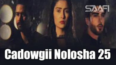 Cadowgii Nolosha Part 25