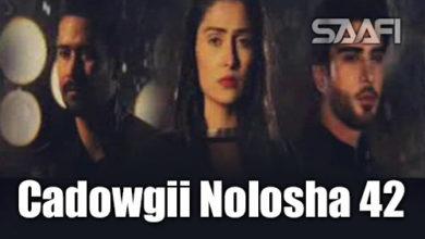 Photo of Cadowgii Nolosha Part 42 Musalsal Hindi Af Soomaali