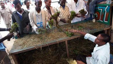 Photo of Kismayo on the spot over charcoal trade