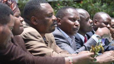 Kenya: Meru miraa farmers to hold talks with Somaliland on taxes 36 Shares
