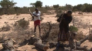 Photo of Deforestation in Somaliland: Challenges and Solutions