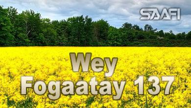 Photo of Wey Fogaatay Part 137 Halkan riix oo daawo