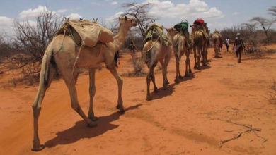 Kenya: North East Counties on high alert as Rift Valley Fever kills 13