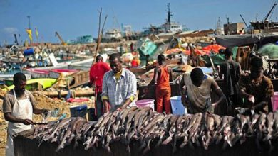 Somalia exports fish after 30-year break