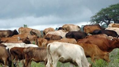 Photo of Wajir lifts meat ban, says Rift Valley Fever contained
