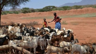 Photo of Africa's nomadic herders help, not harm, land and planet – U.N.