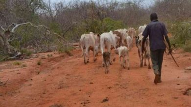 Photo of Two MPs want Somali herdsmen flushed out from Mutomo, Kitui East