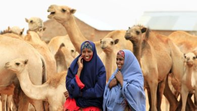 Photo of Crowdfarming is being used to bring Somalia's livestock market into the digital economy