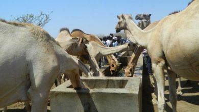 Photo of Somalis, Boranas sign peace accord
