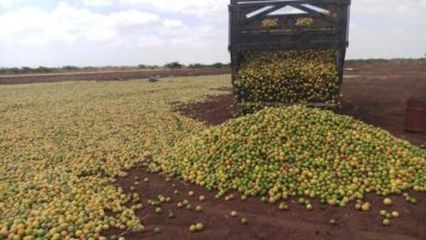 Photo of Somali lemons and sesame find new export markets in Turkey