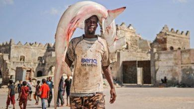 Photo of China-Somalia fishing deal may revive sea piracy