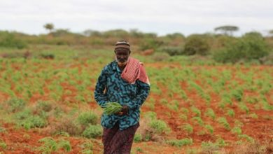 Photo of UN says dry spell may worsen humanitarian crisis in Somalia