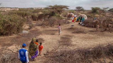 Photo of UN allocates 45 mln USD to stave off famine risks in Horn of Africa