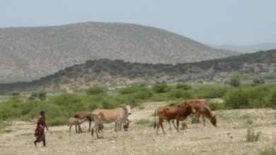 Photo of Somali aid community faces up to a new reality of recurring drought
