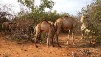 Photo of Disarm The Somali Herders Or Give Us Guns, Kitui South Residents Tell Government