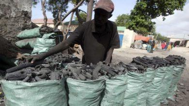 Photo of Kuwait slaps ban on Somalian coal due to terror financing