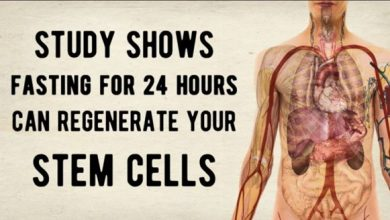 Photo of Study Shows Fasting For One Day Can Regenerate Your Stem Cells