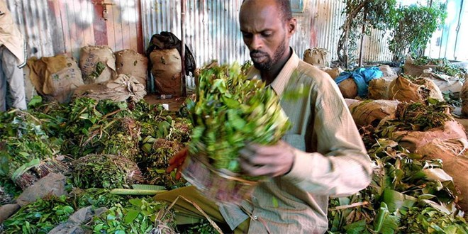 Photo of Exports to Somalia fall in September