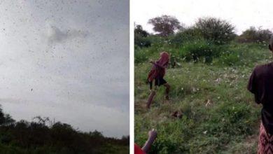 Photo of Alarm as locusts invade northern Kenya