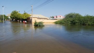 Photo of Galkayo fresh fruit sellers go out of business as floods halt supplies from southern regions