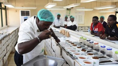 Photo of Tea prices fall to the lowest this year at Mombasa Auction