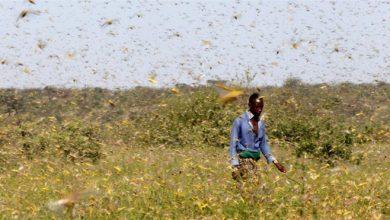 Photo of Locust plague warning: East Africa braces for THIRD devastating infestation
